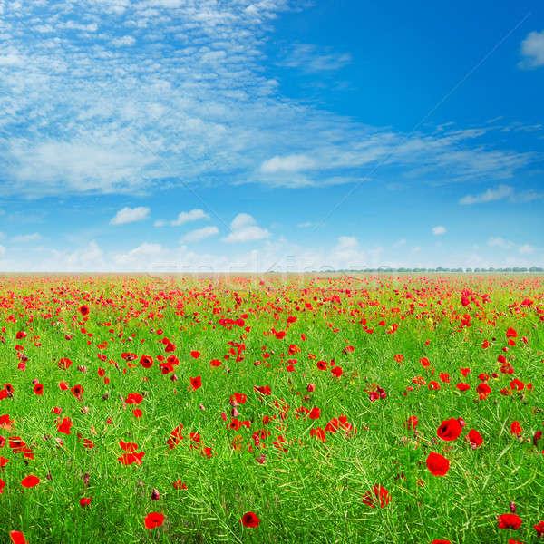 ストックフォト: 草原 · ポピー · 青空 · 空 · 雲