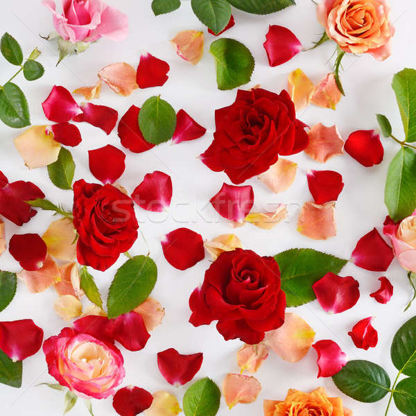 Flowers composition. Red roses on a white wooden background. Stock photo © alinamd