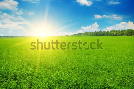 field and sunrise in the blue sky Stock photo © alinamd