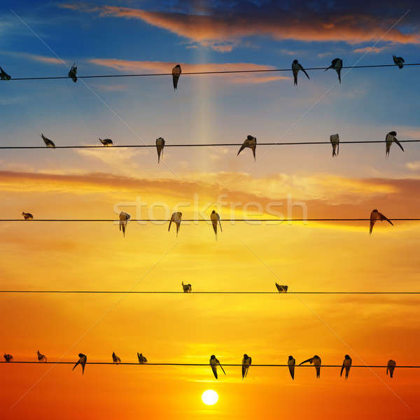 flock of birds on a background of sunrise Stock photo © alinamd