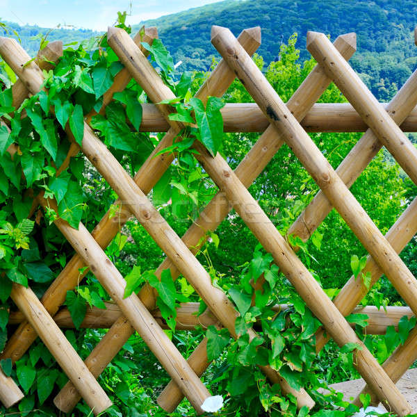 wooden fence and green plants Stock photo © alinamd