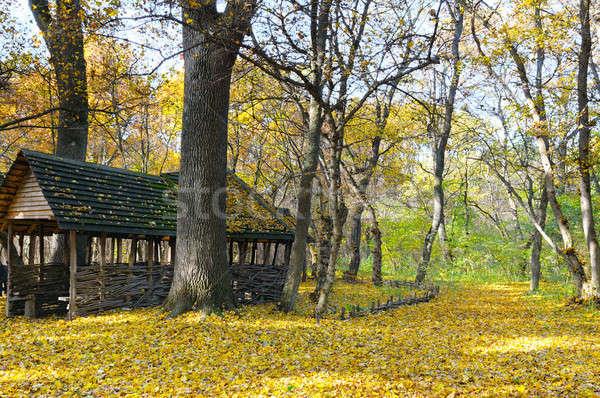Schronisko piękna jesienią lasu drzewo charakter Zdjęcia stock © alinamd