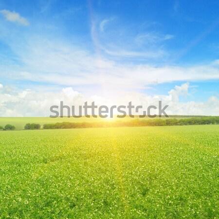 Dawn in the field Stock photo © alinamd