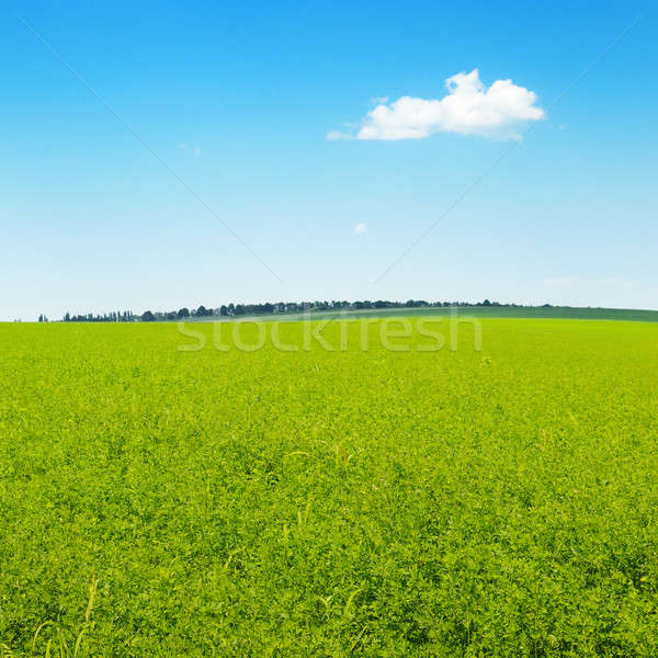 Pittoresque vert domaine ciel bleu nuages printemps Photo stock © alinamd