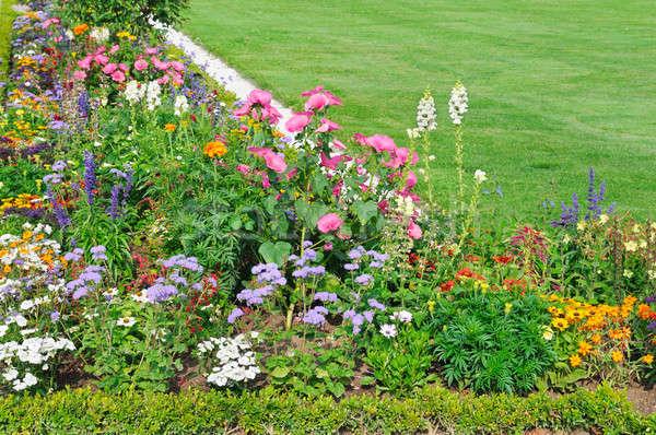 花壇 緑 芝生 美しい 春 草 ストックフォト © alinamd