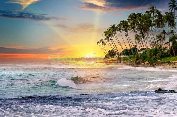 Fantastik gündoğumu okyanus gökyüzü su ağaç Stok fotoğraf © alinamd