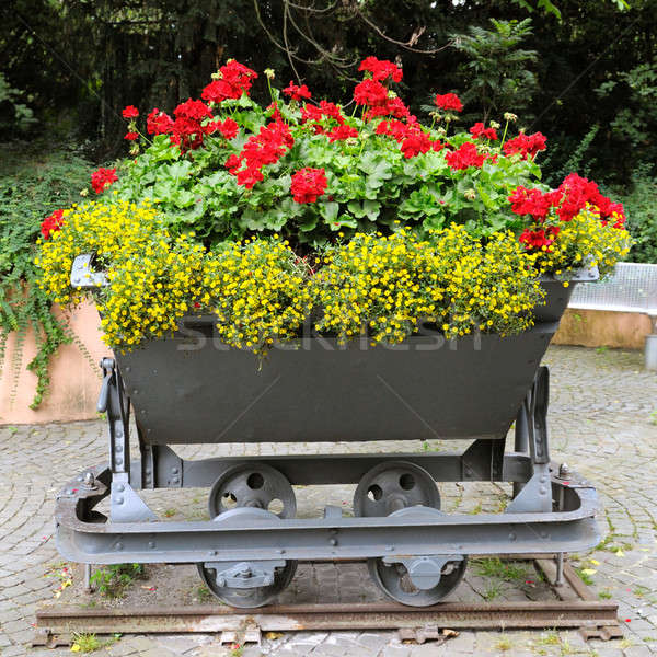 interesting flower bed in the trolley Stock photo © alinamd