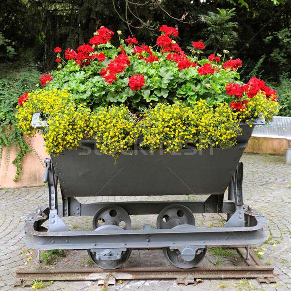 érdekes virágágy tavasz természet terv kert Stock fotó © alinamd