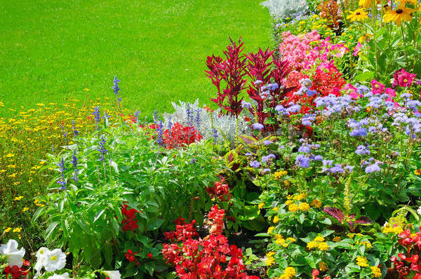 summer flowerbed and green lawn Stock photo © alinamd