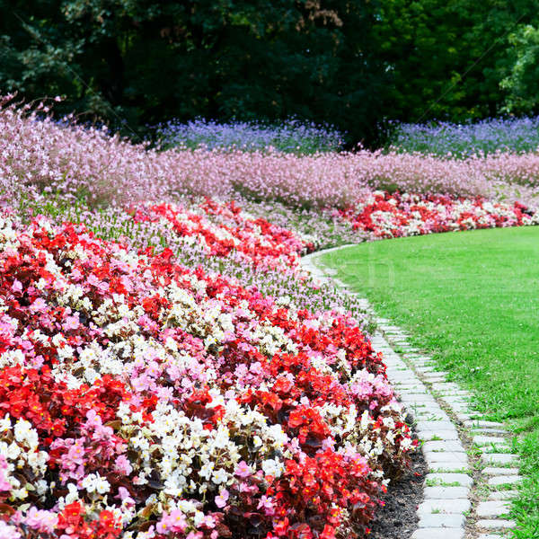 bright flower bed and green grass in the summer park Stock photo © alinamd