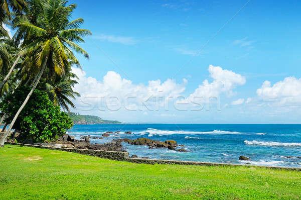 Stockfoto: Oceaan · pittoreske · strand · blauwe · hemel · kokosnoot · palmen