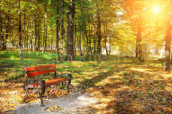 autumn park with paths and benches and sun Stock photo © alinamd