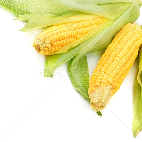 Corn cobs isolated on a white background Stock photo © alinamd