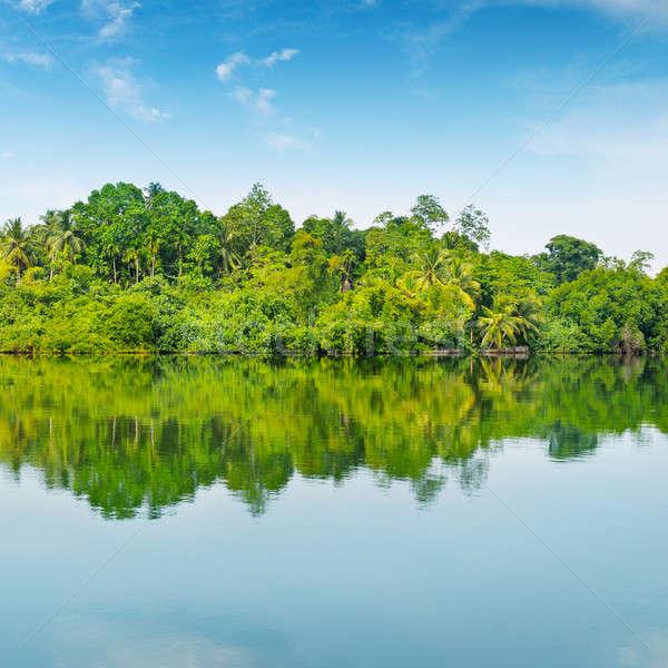 Сток-фото: Blue · Sky · небе · лес · пейзаж · лист · деревья