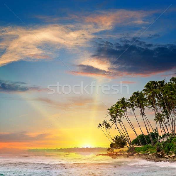 Fantastyczny Świt ocean niebo wody drzewo Zdjęcia stock © alinamd