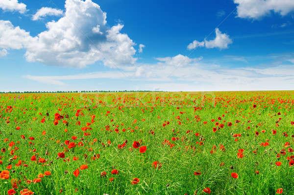 ストックフォト: ポピー · 青空 · 草原 · 雲 · 春