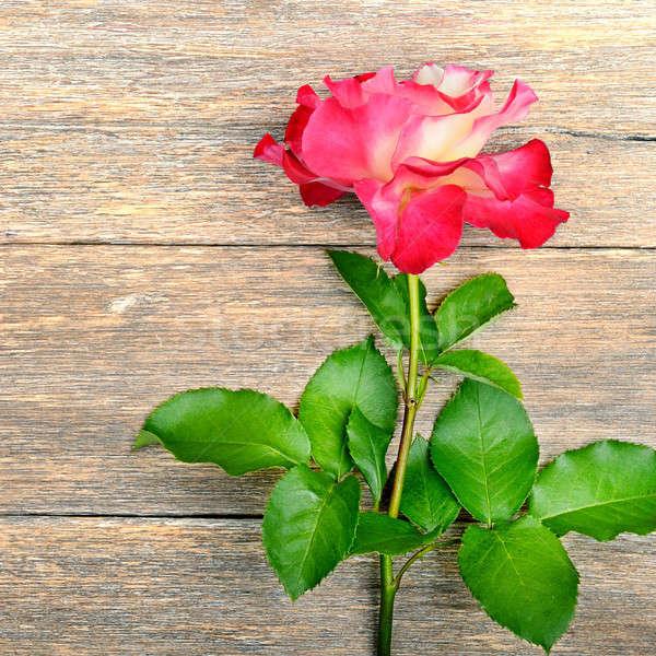 Gül çiçek ahşap kırmızı gül çiçekler kahverengi Stok fotoğraf © alinamd