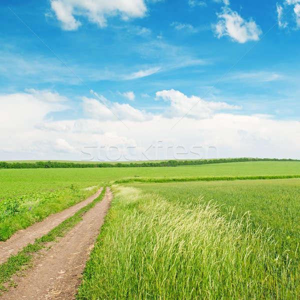 小麦 道路 青空 麦畑 田舎道 空 ストックフォト © alinamd