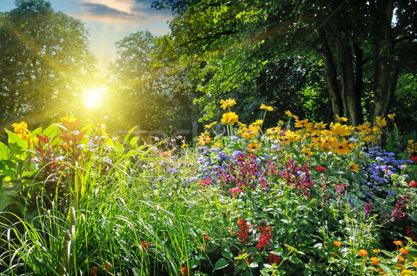 Stock photo: summer park with a beautiful flower bed