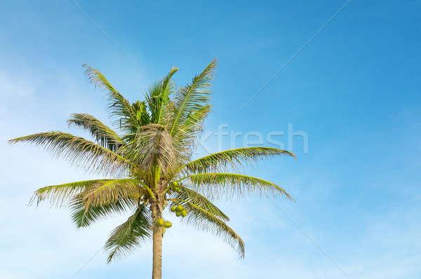 high palm on background of blue sky Stock photo © alinamd