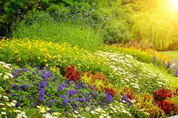 beautiful background of bright garden flowers Stock photo © alinamd