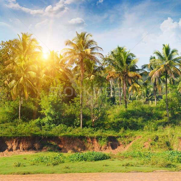 Palm bosje zonsopgang hemel bos zon Stockfoto © alinamd