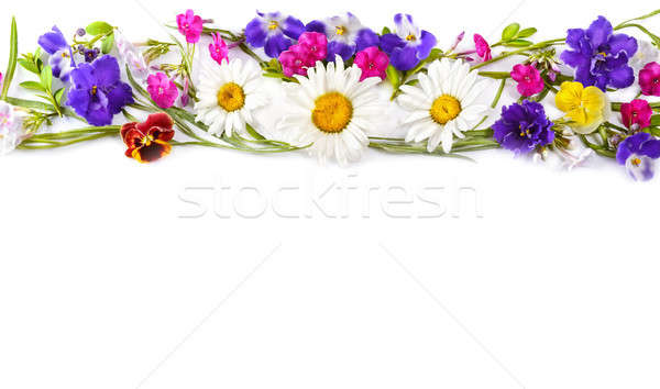 Chamomile and Violet isolated on white background. Flat lay, top Stock photo © alinamd