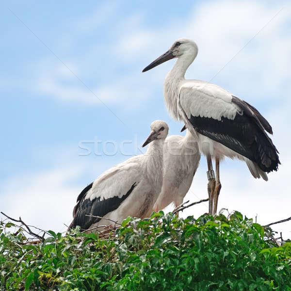 гнезда небе птица синий черный молодые Сток-фото © alinamd