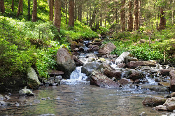 mountain river and coniferous forest Stock photo © alinamd