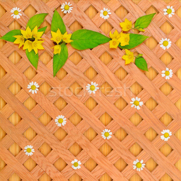 wood background, white daisies and pattern of wild flowers Stock photo © alinamd