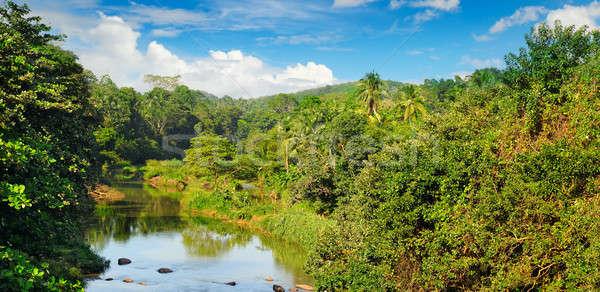 Tropikal orman bankalar nehir mavi gökyüzü mavi Stok fotoğraf © alinamd