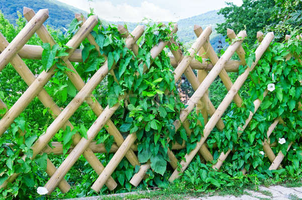 wooden fence Stock photo © alinamd