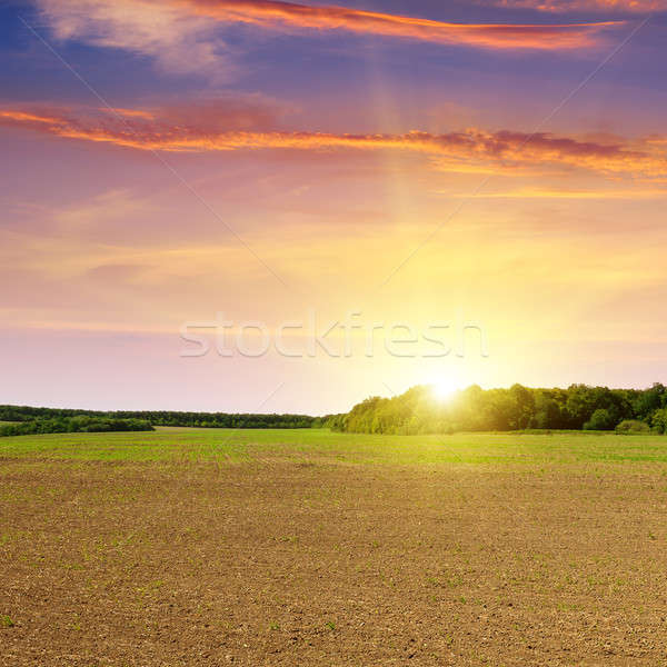 plowed field and beautiful sunset Stock photo © alinamd
