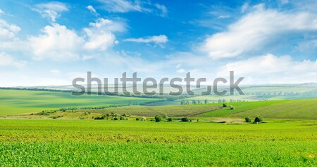 Yeşil alan mavi gökyüzü ışık bulutlar bahar Stok fotoğraf © alinamd