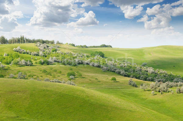 landscape with hilly field and blue sky Stock photo © alinamd