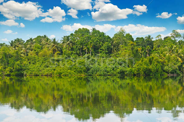 Tropical palm forest on river bank Stock photo © alinamd