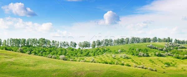 spring landscape Stock photo © alinamd