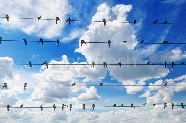 Sereg kék ég természet terv telefon háttér Stock fotó © alinamd