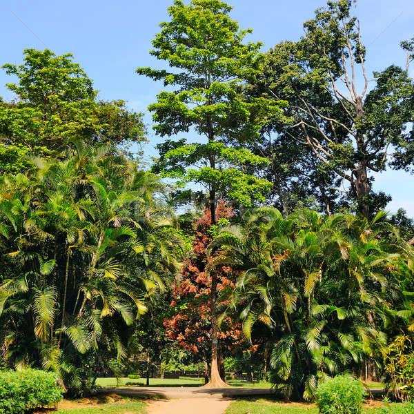 Tropische palmbomen stad park ander loof Stockfoto © alinamd