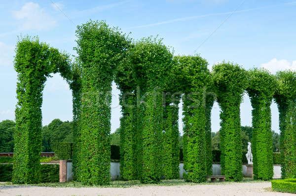 Bella parco cielo albero legno città Foto d'archivio © alinamd