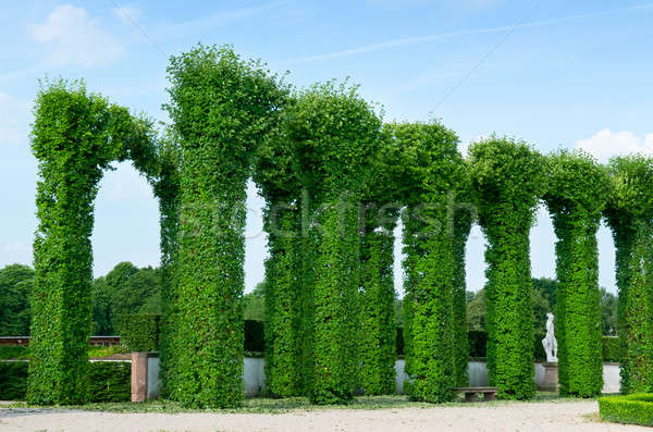 beautiful shrubs in the park Stock photo © alinamd