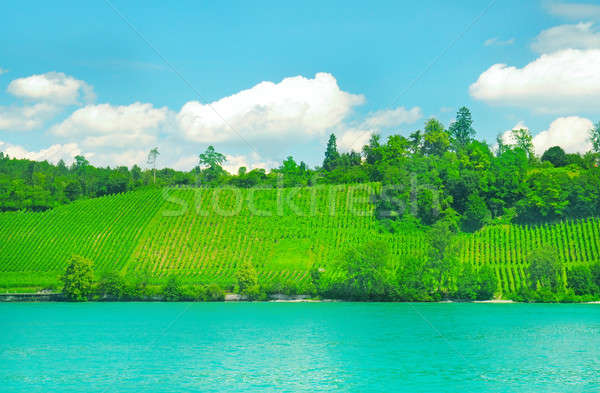 vineyards on the hilly bank of the river Stock photo © alinamd