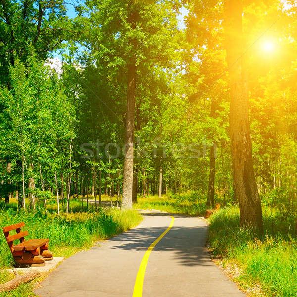 été parc belle marche ciel bois Photo stock © alinamd