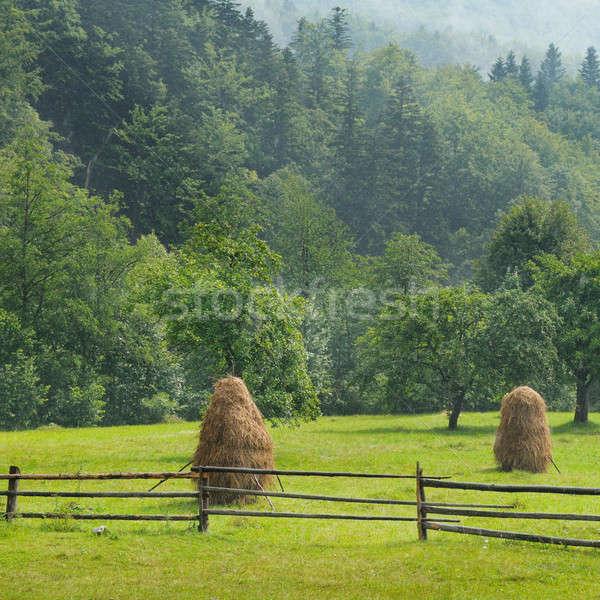 Dağ vadi çim orman doğa yaz Stok fotoğraf © alinamd