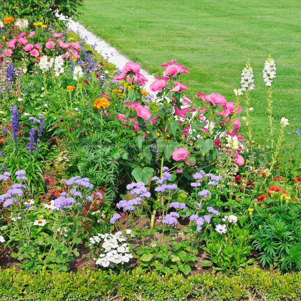Gyönyörű virágágy zöld fű virág fű levél Stock fotó © alinamd