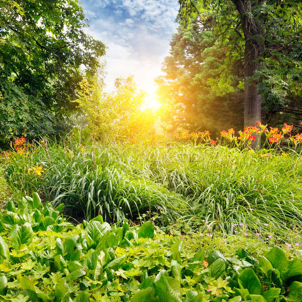 лет парка красивой Клумба небе трава Сток-фото © alinamd