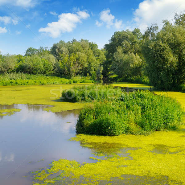 Nat meer aquatisch vegetatie hemel water Stockfoto © alinamd