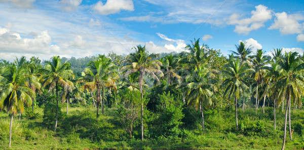 Сток-фото: тропические · пальмами · Blue · Sky · свет · облака · трава