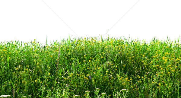 Annual herbs isolated on white background Stock photo © alinamd
