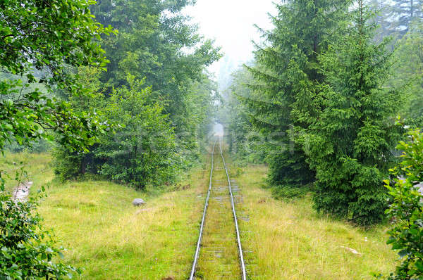 narrow-gauge railway in the forest Stock photo © alinamd